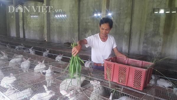 Làm giàu ở nông thôn: Nuôi thỏ bắt ăn kham khổ, bán đắt như tôm tươi-3