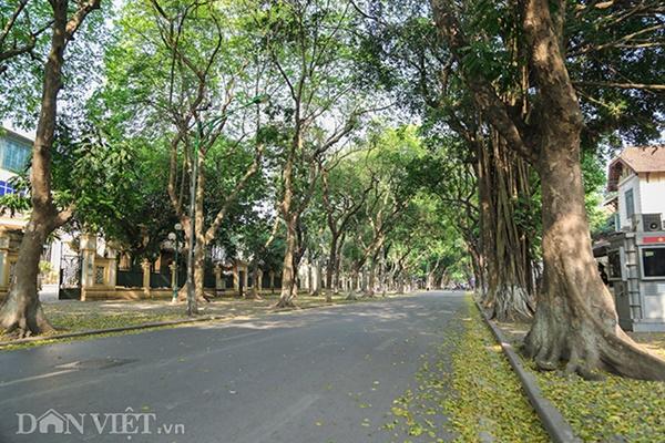 ẢNH: Mùa lá sấu nhuộm vàng trên con đường lãng mạn nhất Hà Nội-1