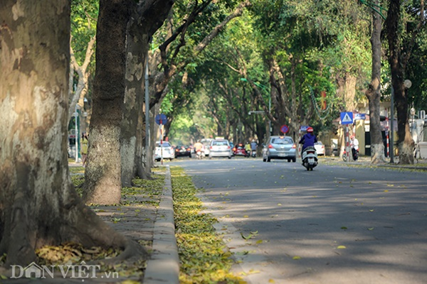 ẢNH: Mùa lá sấu nhuộm vàng trên con đường lãng mạn nhất Hà Nội-3