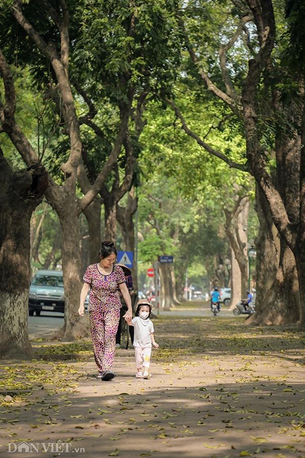 ẢNH: Mùa lá sấu nhuộm vàng trên con đường lãng mạn nhất Hà Nội-4