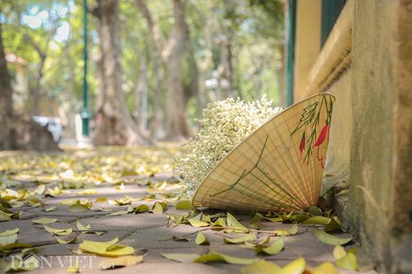 ẢNH: Mùa lá sấu nhuộm vàng trên con đường lãng mạn nhất Hà Nội-8