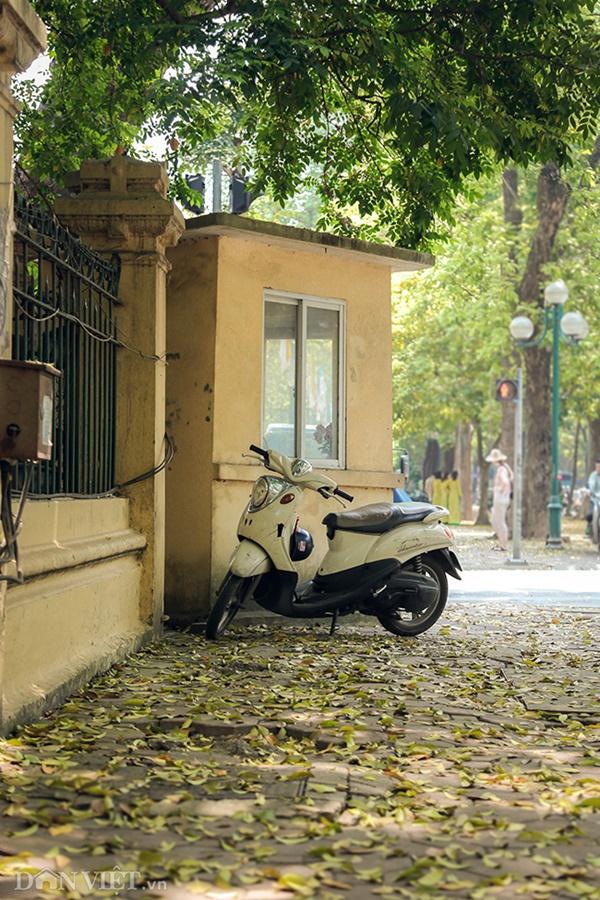 ẢNH: Mùa lá sấu nhuộm vàng trên con đường lãng mạn nhất Hà Nội-11