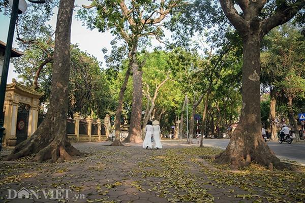 ẢNH: Mùa lá sấu nhuộm vàng trên con đường lãng mạn nhất Hà Nội-12