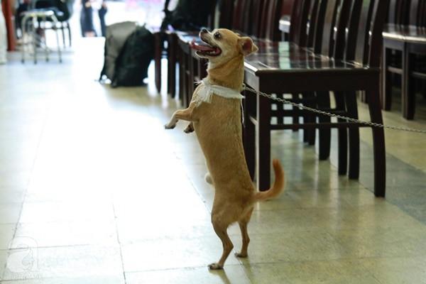 Rơi nước mắt với hình ảnh chú cún nhỏ buộc khăn tang trắng, quanh quẩn không rời bên linh cữu cố nghệ sĩ Lê Bình-7