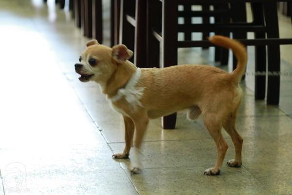Rơi nước mắt với hình ảnh chú cún nhỏ buộc khăn tang trắng, quanh quẩn không rời bên linh cữu cố nghệ sĩ Lê Bình-3
