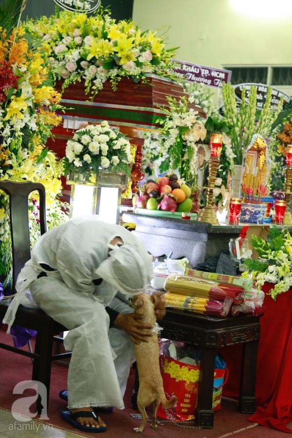 Rơi nước mắt với hình ảnh chú cún nhỏ buộc khăn tang trắng, quanh quẩn không rời bên linh cữu cố nghệ sĩ Lê Bình-5