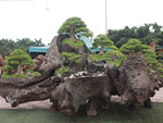 Người đàn ông Nghệ An biến 2 cây duối bỏ đi thành cổng nhà có giá hơn nửa tỷ-16