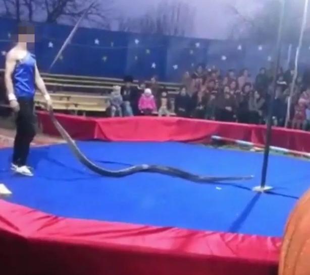 Nga: Diễn viên xiếc bị trăn siết cổ chết ngay trước mắt khán giả-1