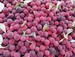 Loạn giá bán quả thanh mai cuối mùa trên chợ mạng: Nơi 30 ngàn/kg, nơi rao tận 70 ngàn-5