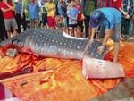 Cá voi xuất hiện ở Quy Nhơn, người dân phấn khích gọi ông ơi-1