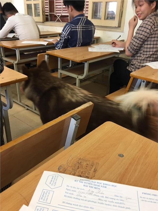 Nhân vật lạ xuất hiện trong phòng thi khiến sinh viên vừa ngỡ ngàng vừa buồn cười-2
