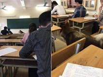 'Nhân vật lạ' xuất hiện trong phòng thi khiến sinh viên vừa ngỡ ngàng vừa buồn cười