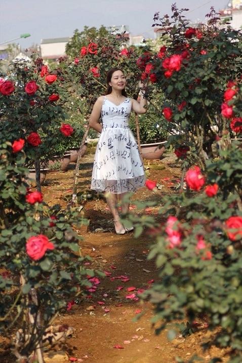 Bỏ việc nhà băng về trồng hoa hồng, 9X Lai Châu kiếm bộn tiền-1
