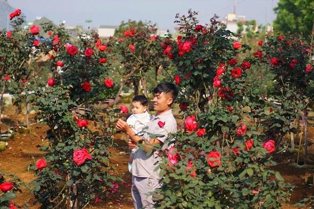 Bỏ việc nhà băng về trồng hoa hồng, 9X Lai Châu kiếm bộn tiền-2