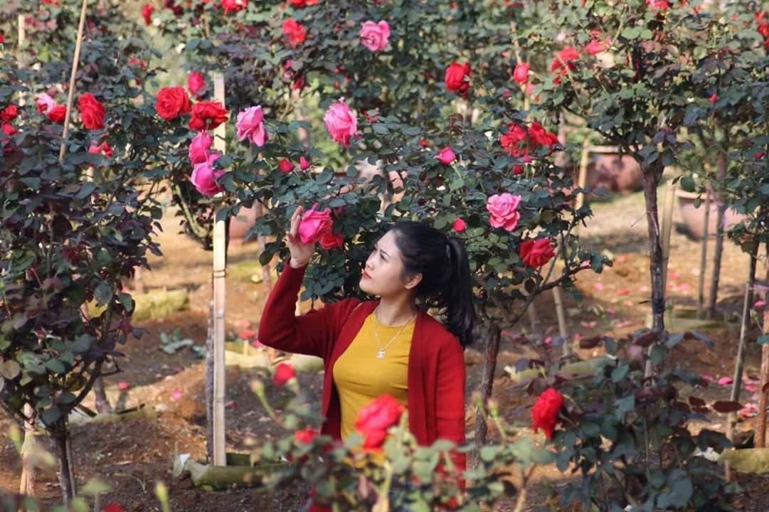 Bỏ việc nhà băng về trồng hoa hồng, 9X Lai Châu kiếm bộn tiền-5