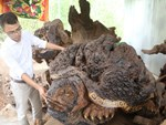 Đồng Tháp lạ nhất Việt Nam: Bán trứng ruồi 15 triệu/kg-3