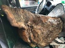 Cây nấm 'khủng' hạng nhất Việt Nam: Nặng 70kg, 60 triệu chưa bán
