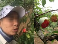 Vào vườn mận thăm quan, nhóm thanh niên cắn hàng loạt quả trên cây, quay clip khoe