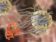'Thuốc kháng sinh đang ngày càng trở nên vô dụng, nhiều bệnh thông thường cũng sẽ không thể điều trị được'