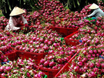 Loại rau đầy rẫy ở nông thôn nhưng vào siêu thị bán với giá hơn 400.000 đồng/nửa kg-3