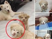 """Xuất hiện chú chó có gương mặt siêu tếu táo, được ví như """"truyền nhân"""" của... Tôn Ngộ Không"""