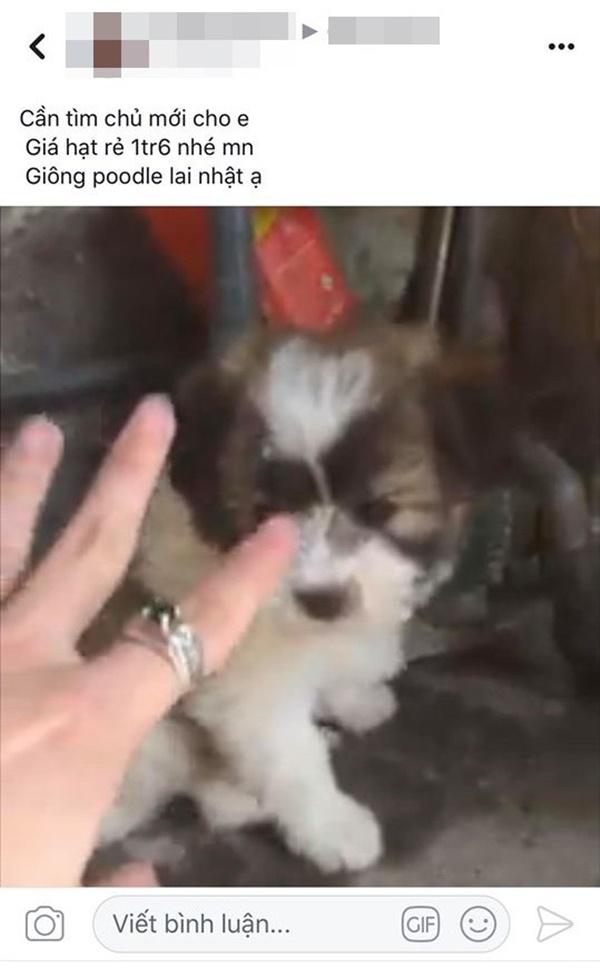Mua hàng online được nâng lên một tầm cao mới: Mua chó Poodle lai Nhật giá triệu rưỡi, nhận về chó ta 1 tháng tuổi-1