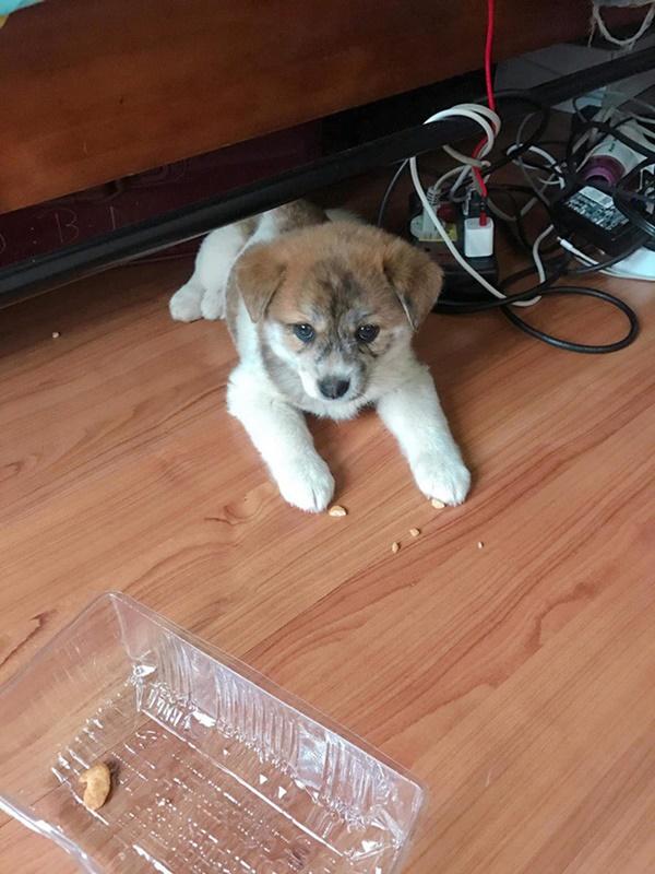 Mua hàng online được nâng lên một tầm cao mới: Mua chó Poodle lai Nhật giá triệu rưỡi, nhận về chó ta 1 tháng tuổi-6