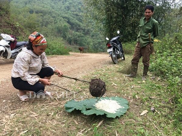 Nữ cao thủ kể chuyện ly kỳ vào rừng săn đặc sản trứng kiến cực lạ-5