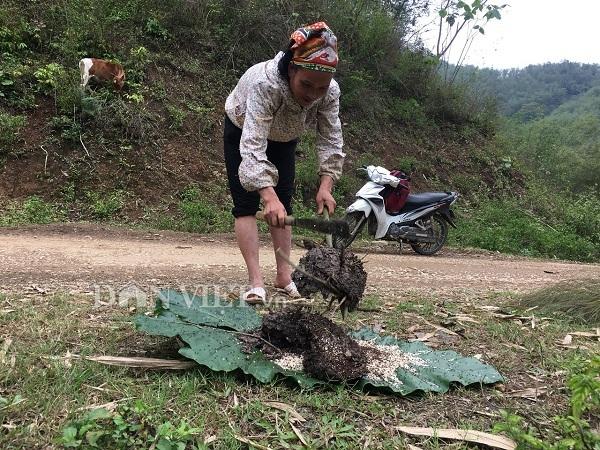 Nữ cao thủ kể chuyện ly kỳ vào rừng săn đặc sản trứng kiến cực lạ-1