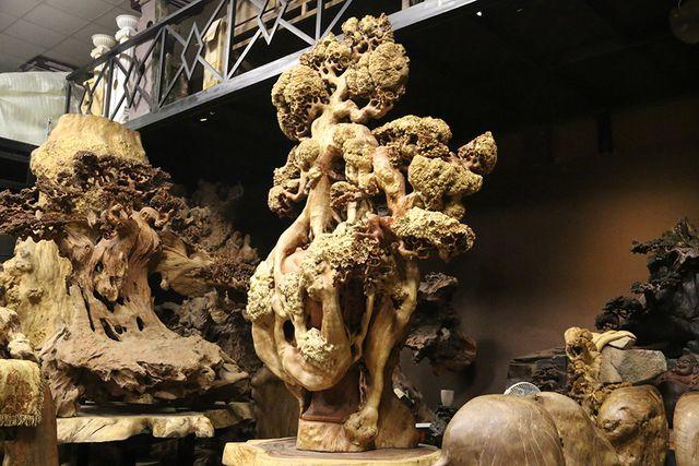 Siêu phẩm mai cổ từ gỗ nu quý hiếm giá bạc tỷ của dân chơi Hà Nội-1