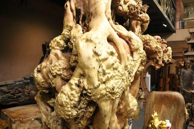Siêu phẩm mai cổ từ gỗ nu quý hiếm giá bạc tỷ của dân chơi Hà Nội-3