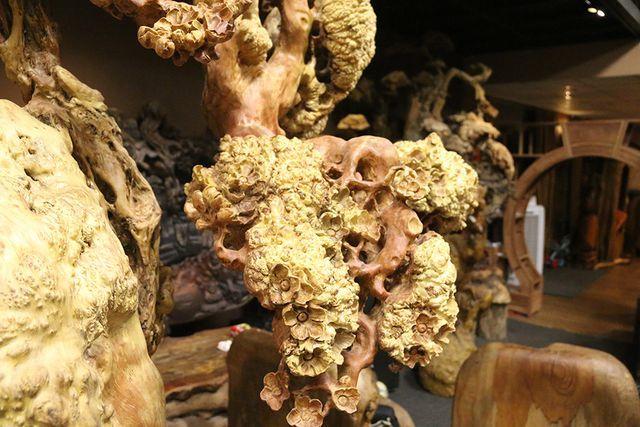 Siêu phẩm mai cổ từ gỗ nu quý hiếm giá bạc tỷ của dân chơi Hà Nội-6