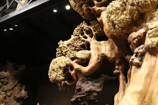 Siêu phẩm mai cổ từ gỗ nu quý hiếm giá bạc tỷ của dân chơi Hà Nội-7