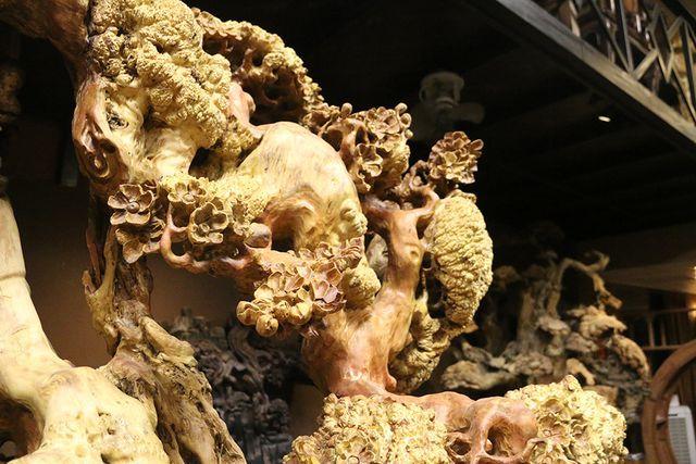 Siêu phẩm mai cổ từ gỗ nu quý hiếm giá bạc tỷ của dân chơi Hà Nội-9