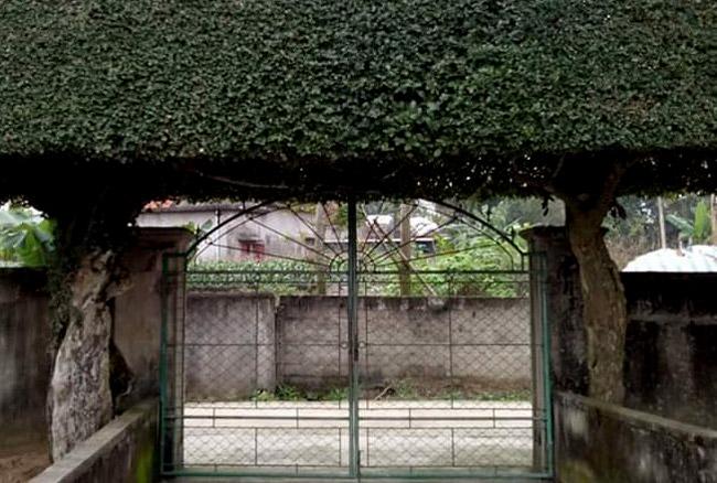 Người đàn ông Nghệ An biến 2 cây duối bỏ đi thành cổng nhà có giá hơn nửa tỷ-9