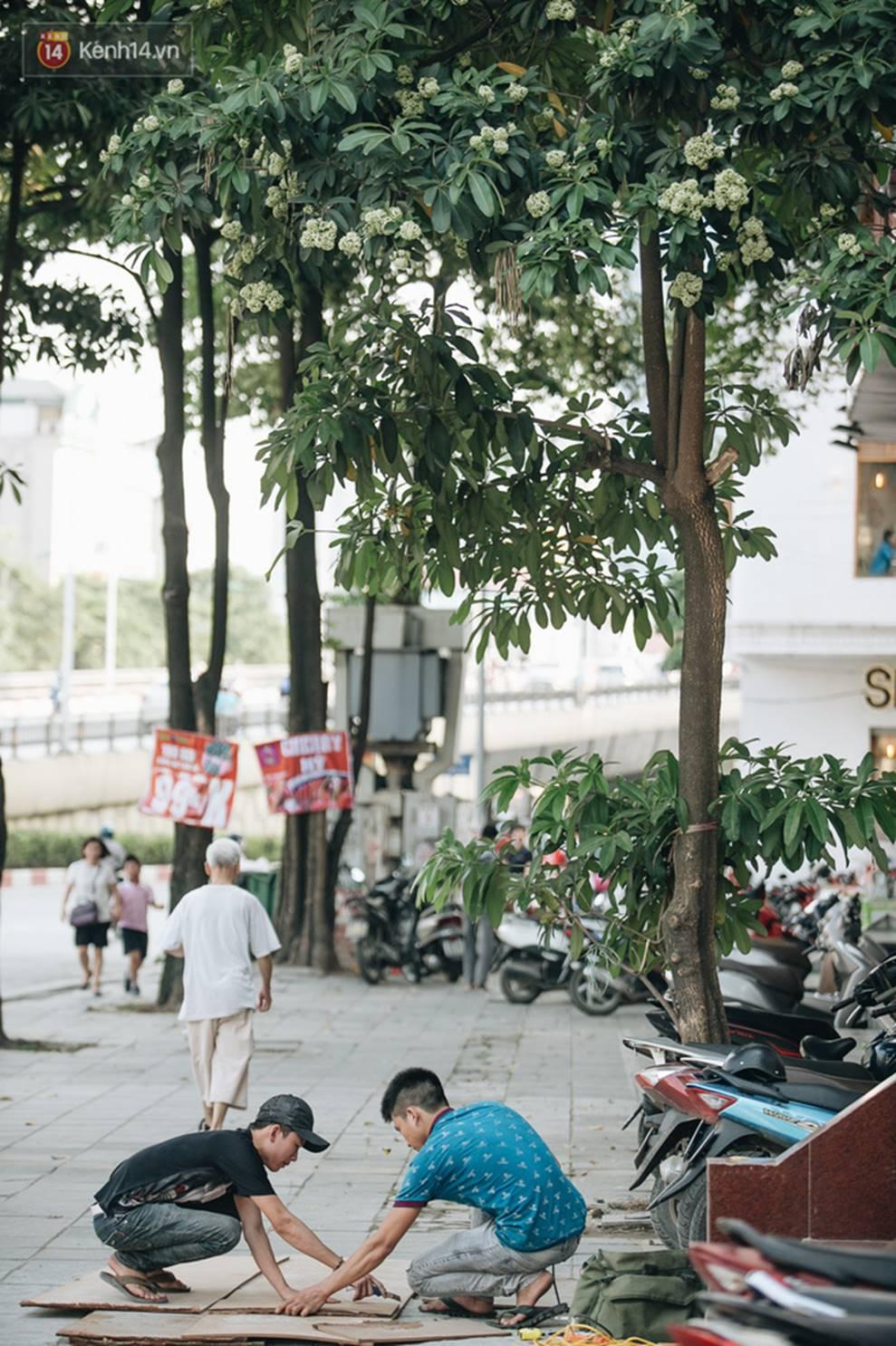 Không chỉ biến hạ thành đông, Hà Nội còn gọi cả hàng cây hoa sữa bung nở khắp phố dù trái mùa-9
