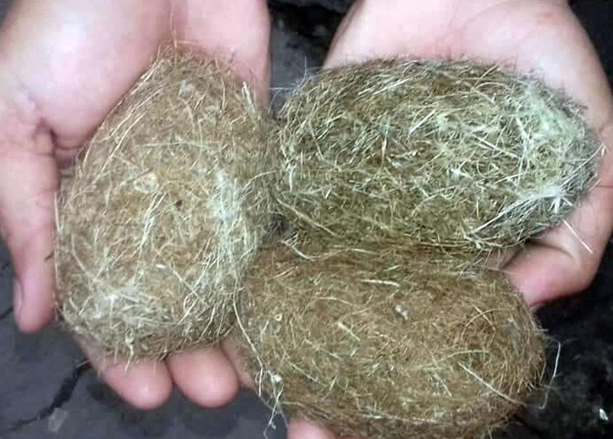 Dân phát hiện 3 vật thể lạ nghi cát lợn ở An Giang-2