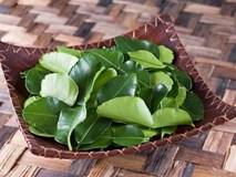 Lá chanh ở Việt Nam chỉ để ăn với thịt gà, sang châu Âu bán 6,3 triệu/kg