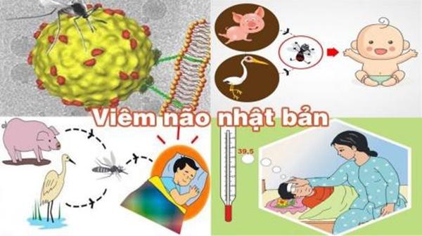 Đã có 1 trường hợp trẻ mắc viêm não Nhật Bản tại Hà Nội: Bệnh viêm não Nhật Bản có lây không và những ai dễ mắc bệnh?-2