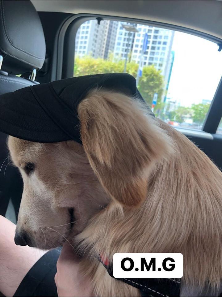 Chú chó đốn tim cư dân mạng bởi loạt biểu cảm nói hộ nỗi lòng của những người... say xe khi đi du lịch-2