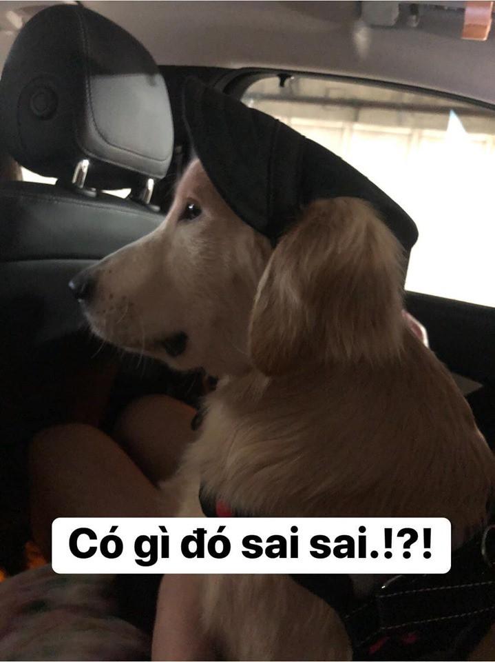 Chú chó đốn tim cư dân mạng bởi loạt biểu cảm nói hộ nỗi lòng của những người... say xe khi đi du lịch-3