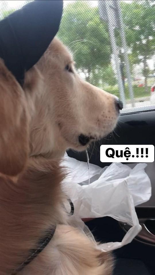 Chú chó đốn tim cư dân mạng bởi loạt biểu cảm nói hộ nỗi lòng của những người... say xe khi đi du lịch-4