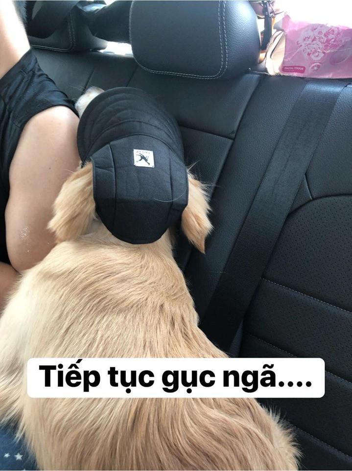 Chú chó đốn tim cư dân mạng bởi loạt biểu cảm nói hộ nỗi lòng của những người... say xe khi đi du lịch-10