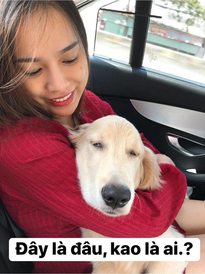 Chú chó đốn tim cư dân mạng bởi loạt biểu cảm nói hộ nỗi lòng của những người... say xe khi đi du lịch-12