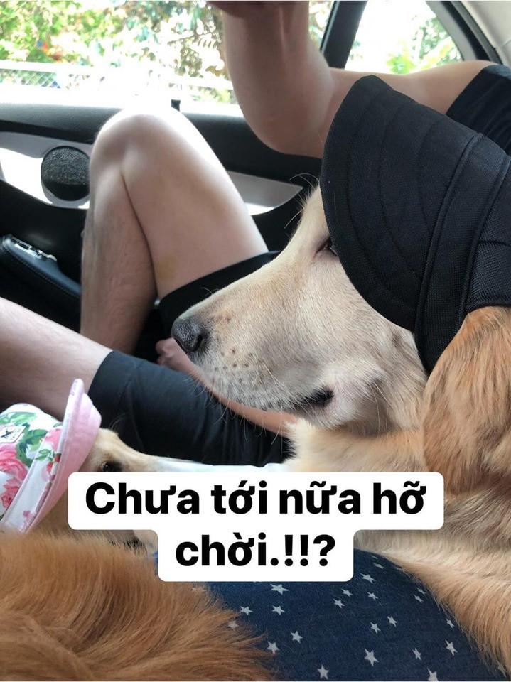 Chú chó đốn tim cư dân mạng bởi loạt biểu cảm nói hộ nỗi lòng của những người... say xe khi đi du lịch-9