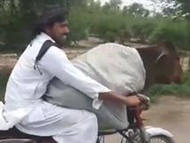 'Dân chơi' lái xe máy chở bò đi dạo phố thu hút mọi ánh nhìn
