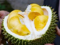 Thực hư việc tử vong vì ăn sầu riêng và uống nước ngọt?