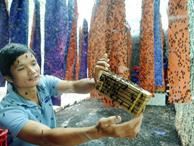 Chuyện lạ: Bỏ lương cao về chăn ruồi mà kiếm bộn tiền