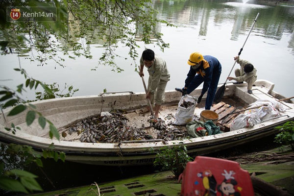 Hà Nội: Cá chết trắng trên hồ Văn Chương, người dân đau đầu vì mùi hôi nồng nặc-2