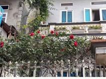 Chỉ 70 triệu, vợ chồng tôi sở hữu nhà vườn 100m2 ở Thủ đô